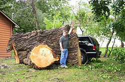 Twin Cities Tree Service