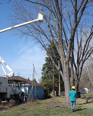 Oak Grove Tree Service Company