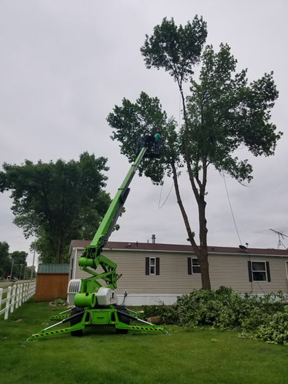 Tree Removal Services for Mobile Home Parks