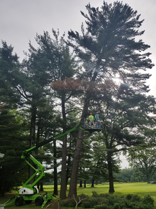 Princeton, MN Hazardous Tree Removal Photo