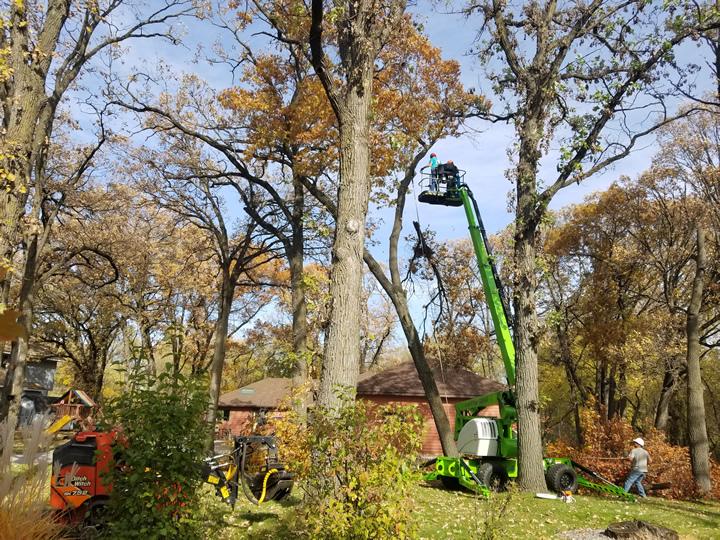 Princeton, MN Fall & Winter Tree Pruning Photo