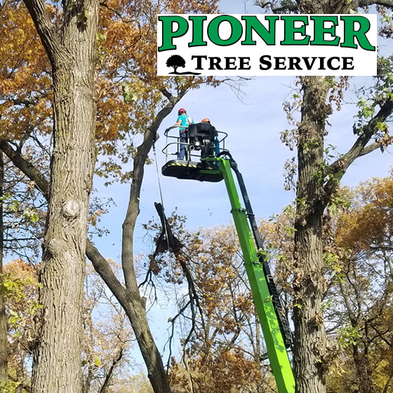 Sherburne County Oak Tree Trimming Photo