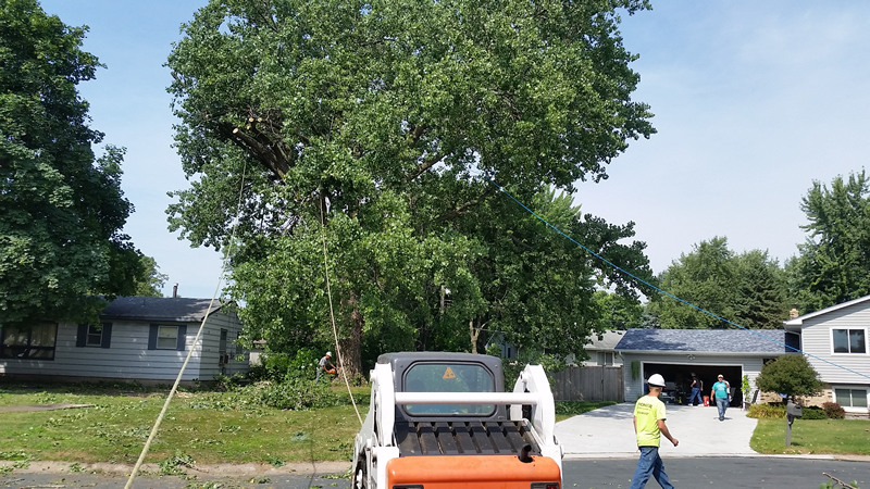 St. Michael MN Tree Services