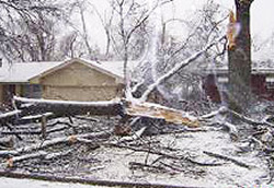 Ice Storm Tree Damage Coon Rapids, MN