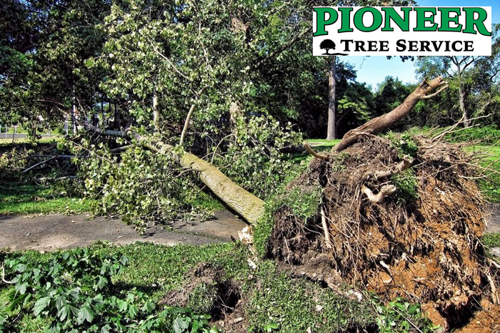 Milaca Tree Service