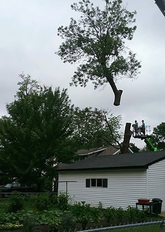 Coon Rapids Tree Removal