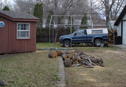 Twin Cities diseased tree treatments