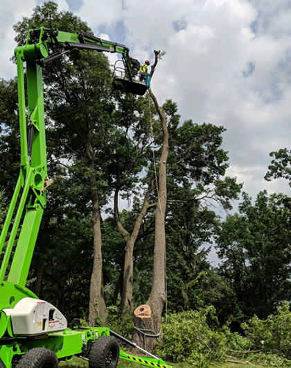 Tree Removal Anoka, MN Photo