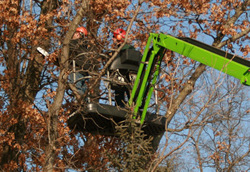We specialize in tree trimming, tree removal and tree services in the Twin Cities of Minneapolis and St. Paul