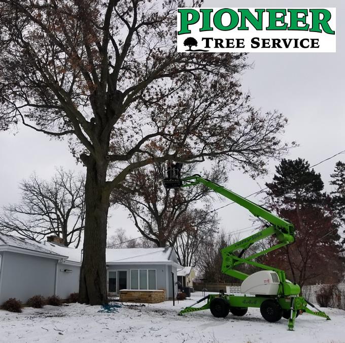 Zimmerman Winter Oak Tree Trimming