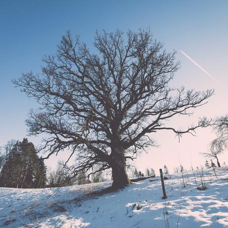 Winter Tree Pruning Photo