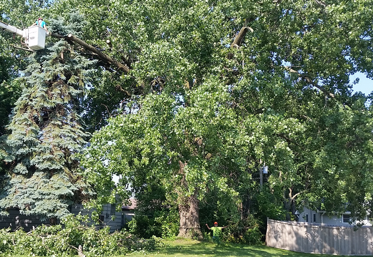 Zimmerman MN Tree Services